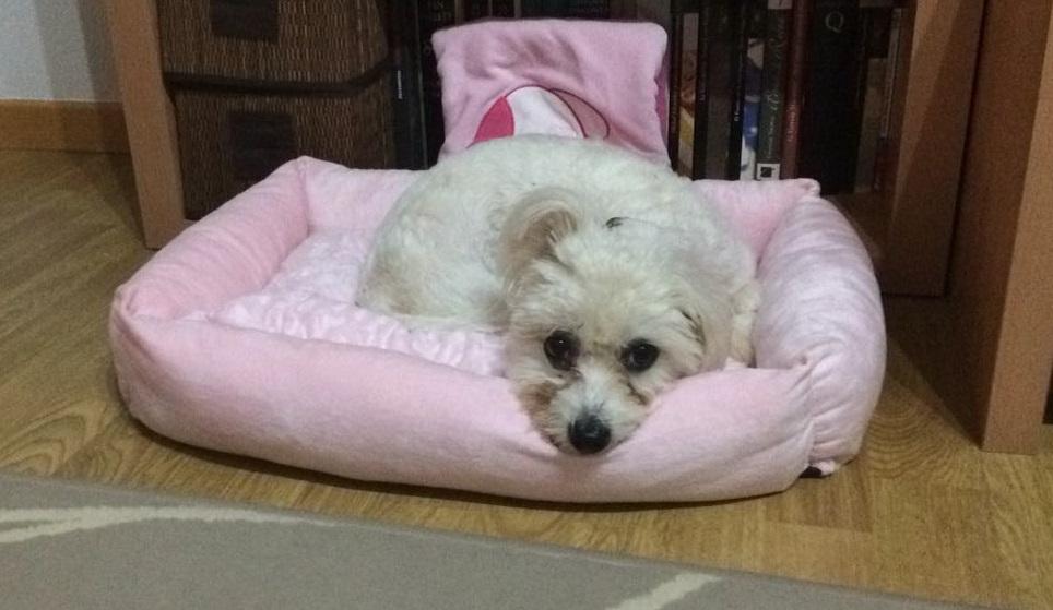 Mina estrenando hogar