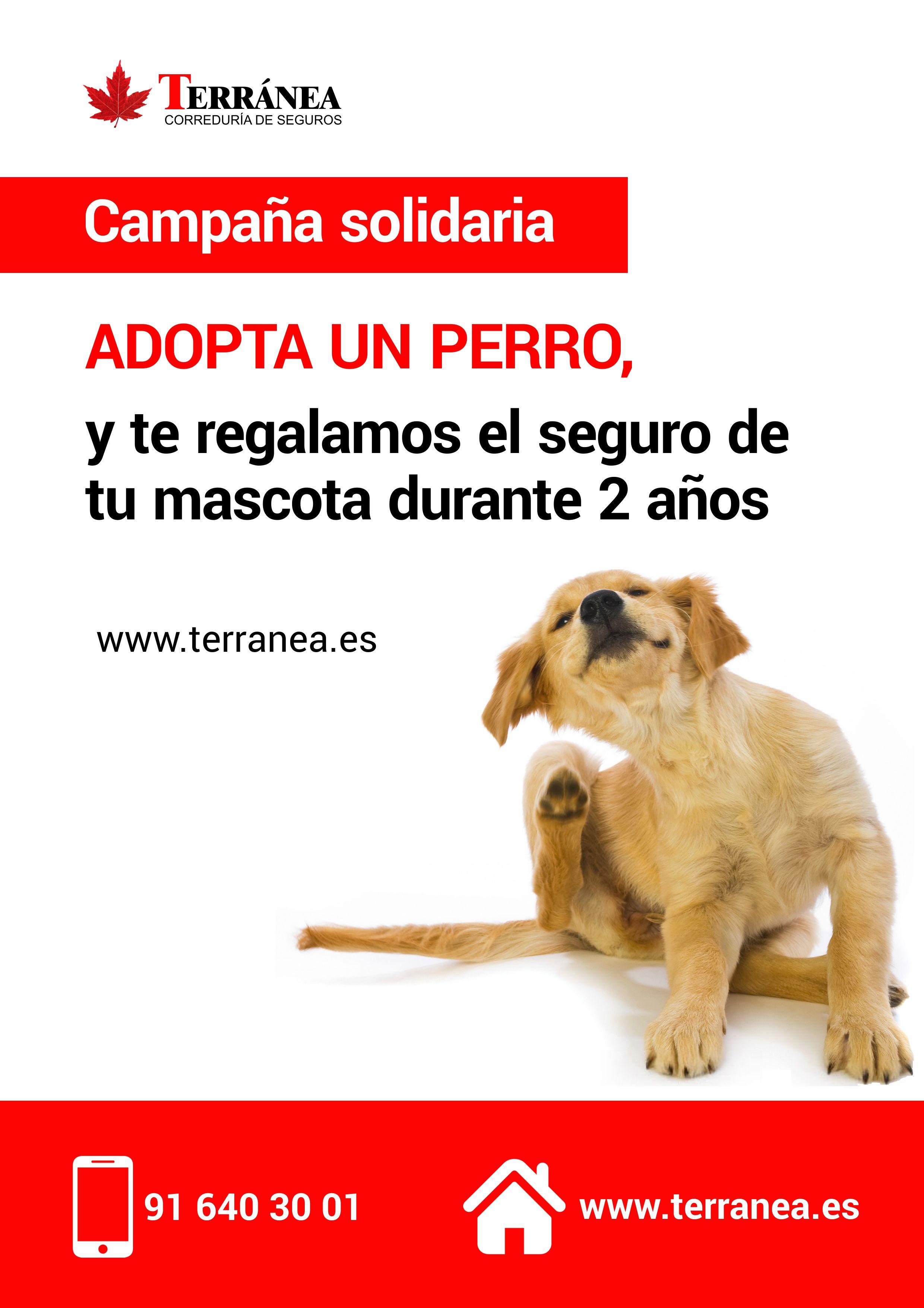 cartel-adopta-un-perro-protectoras